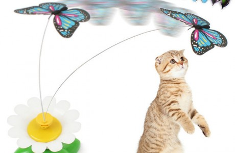משחק תופסת פרפר או ציפור לחתולים